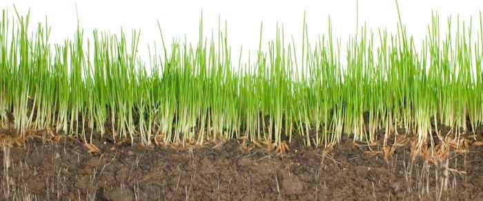 Good soil with grass